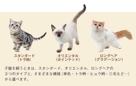 Miyamoto quería quince versiones de Nintendogs Appear_cat_ph